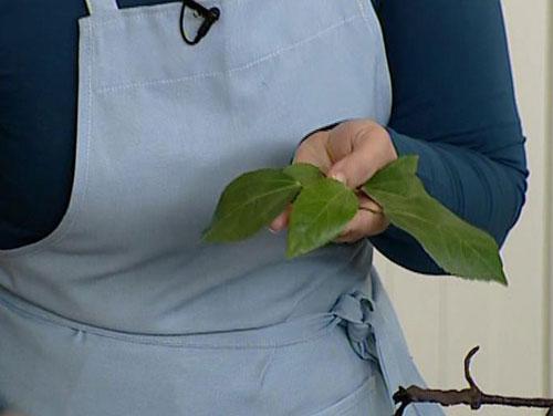 التزيين بأوراق الشجر